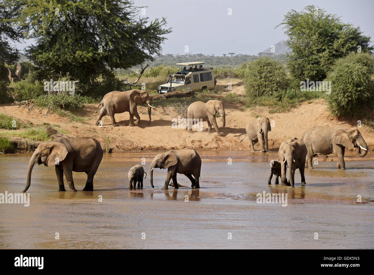 Safari vehicle and elephants at Ewaso (Uaso) Nyiro River, Samburu, Kenya - Stock Image