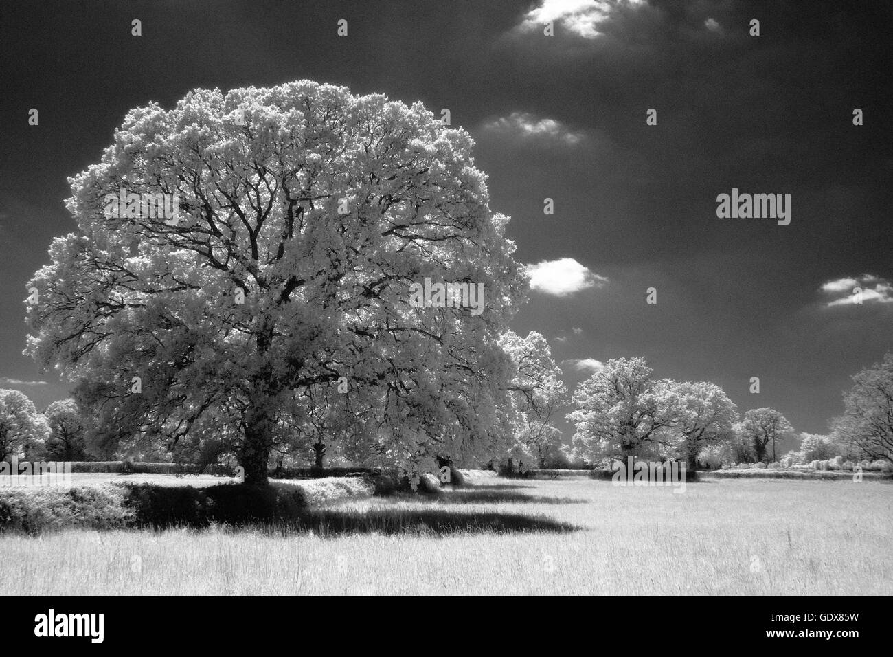 Infra-Red Trees and Field,Hampshire,England - Stock Image