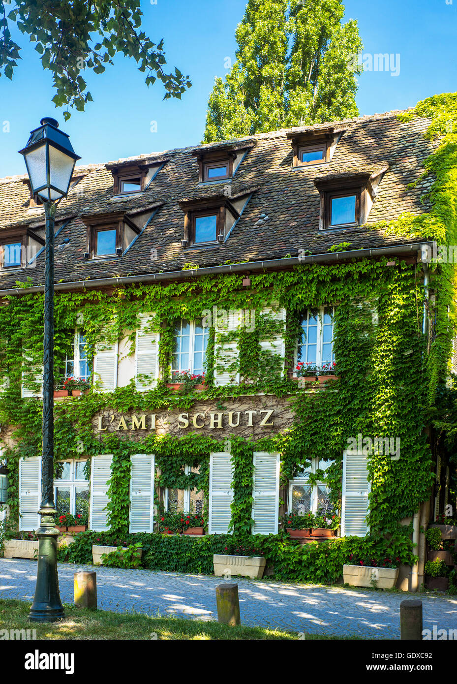 L'Ami Schutz restaurant with ivy covered facade, Strasbourg, Alsace, France, Europe - Stock Image