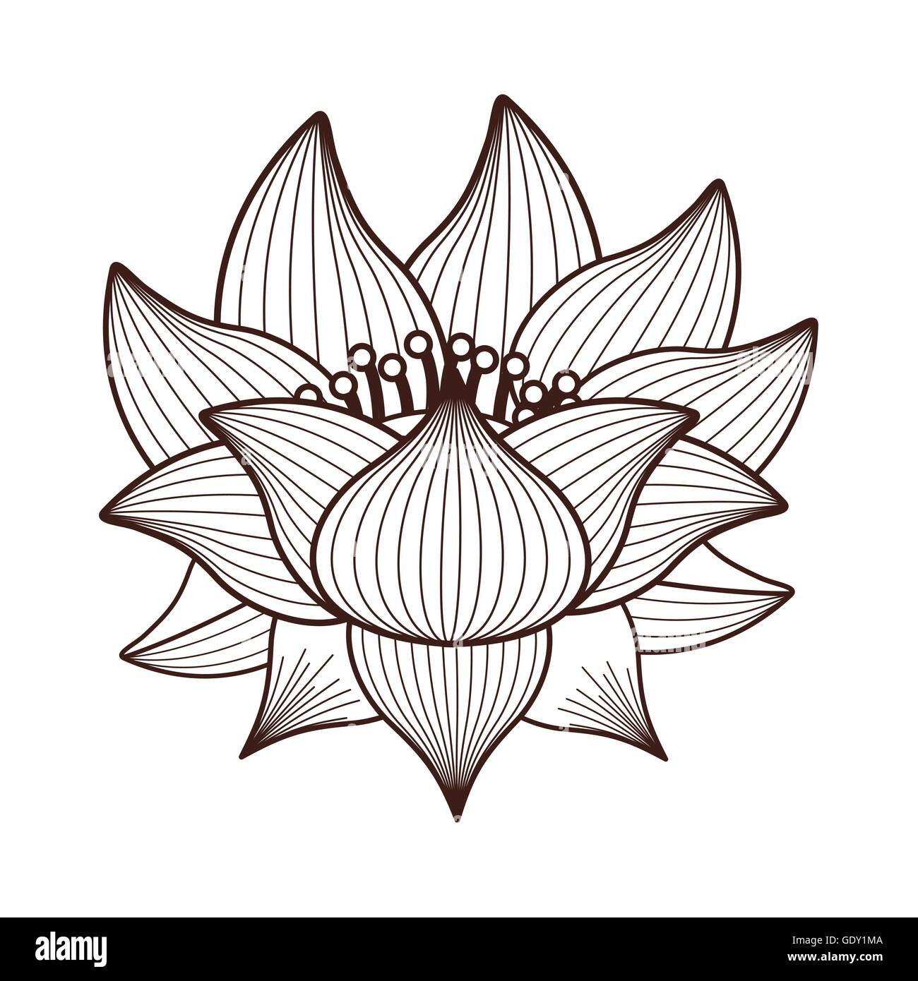 Lotus Flower Drawing Isolated Icon Design Stock Vector Art