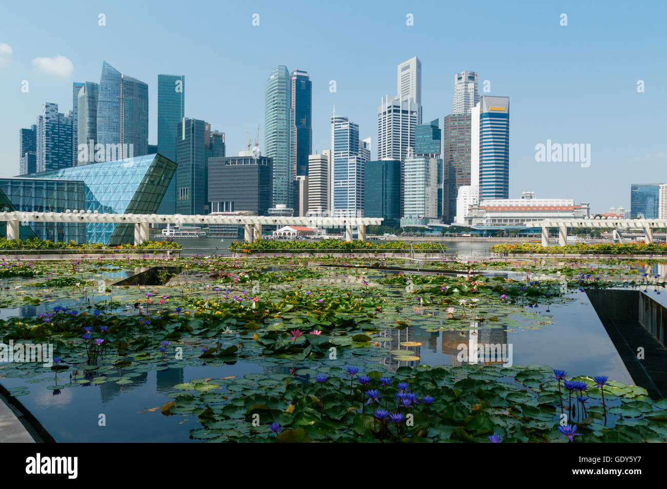 Singapore Central Business district skyline view with a  blooming lily pond at the Art Science Museum building. - Stock Image