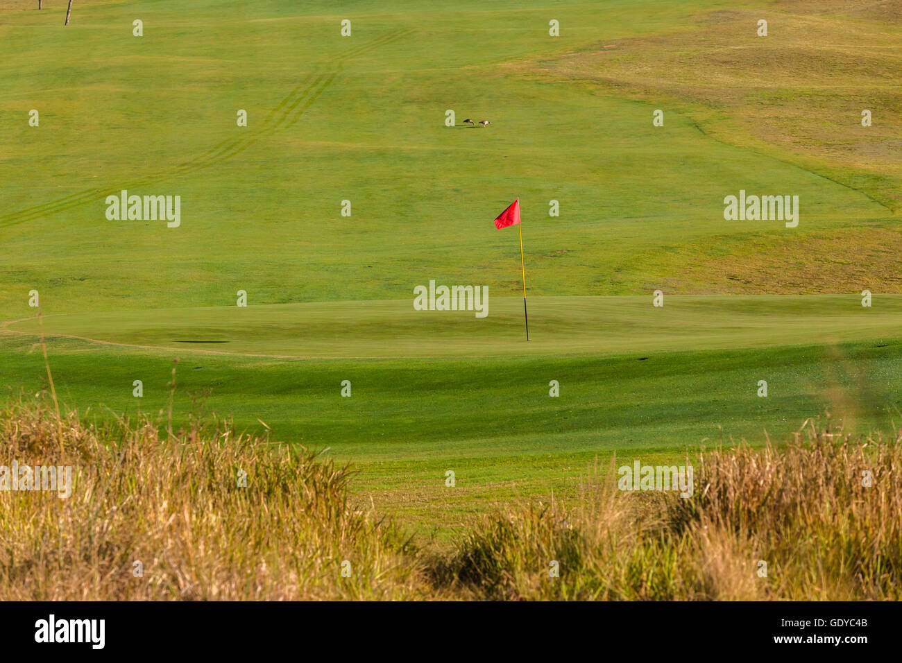 Golf green hole flag stick with fairway landscape - Stock Image