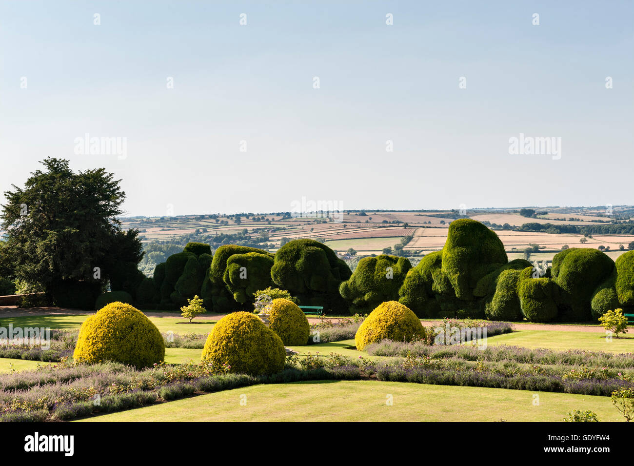 Rockingham Castle, Corby, Northamptonshire, UK. The formal 17c 'Cross Garden' with the 400 year old yew - Stock Image