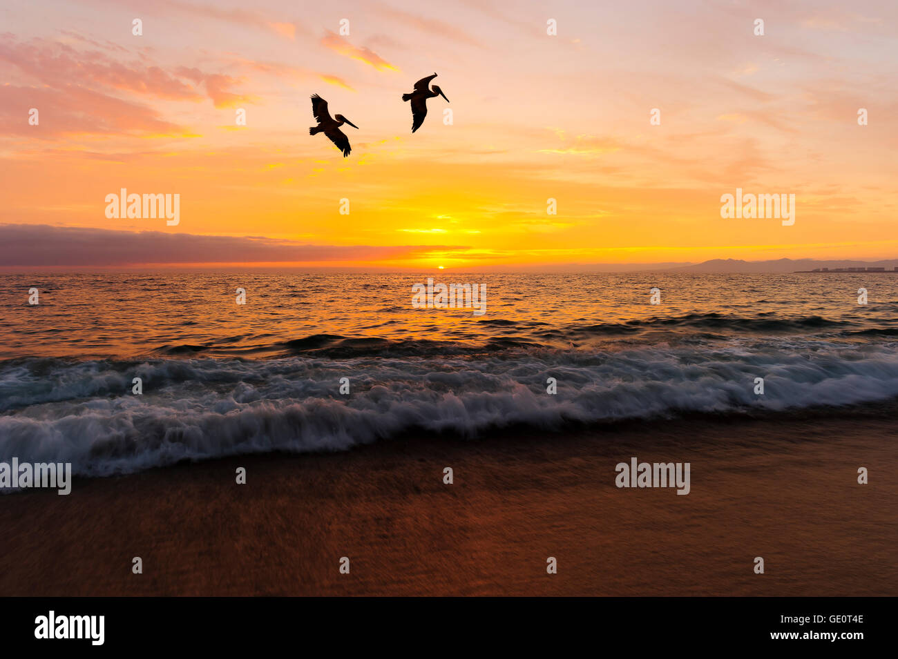 Birds silhouettes is two large seabirds flying agains a vivid and colorful ocean sunset as a gentle wave rolls to - Stock Image