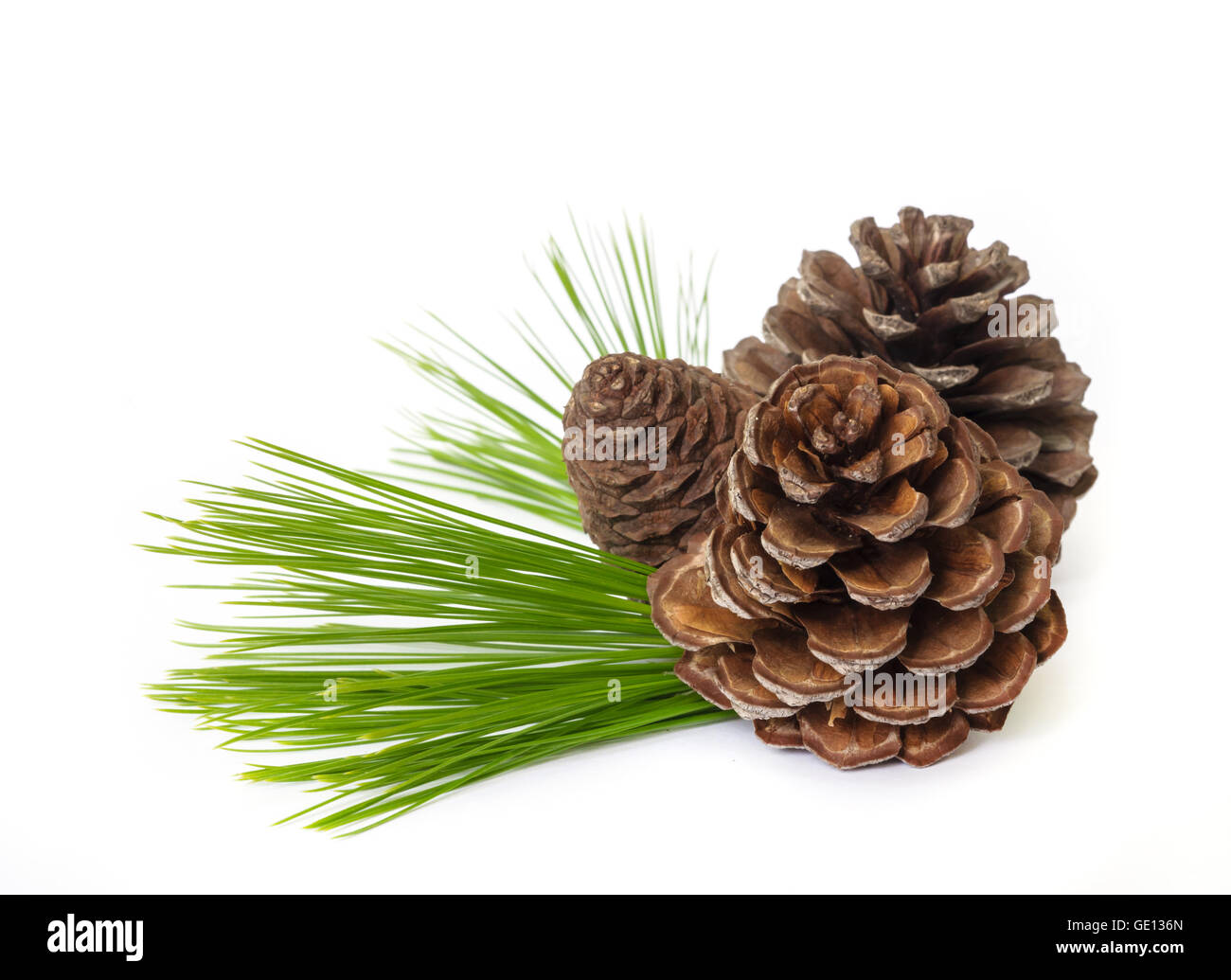 Pine cones with  branches isolated on white background. - Stock Image