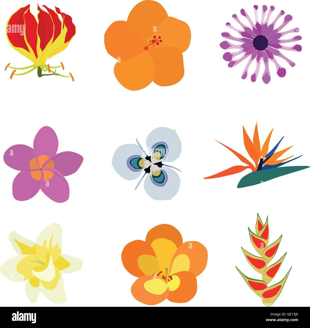 Set of nine exotic flowers containing: Flame Lily, Orange Hibiscus, African Daisy, Plumeria, Moraea villosa, Bird - Stock Vector
