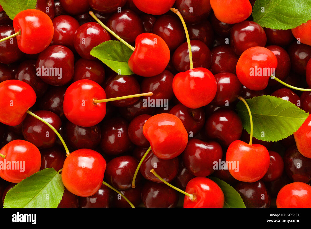 Clean Pile of Red Cherries with Green Leaves. - Stock Image