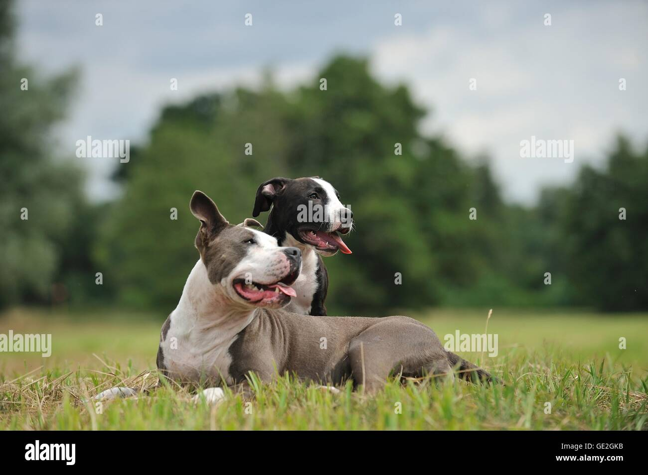 2 dogs Stock Photo