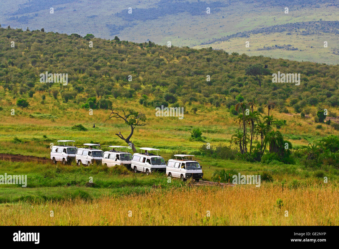 People watching animals from vehicles during safari game drive in Maasai Mara National Reserve. - Stock Image