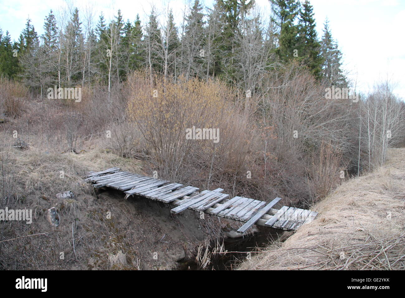 Old bridge on a river near the forest. - Stock Image