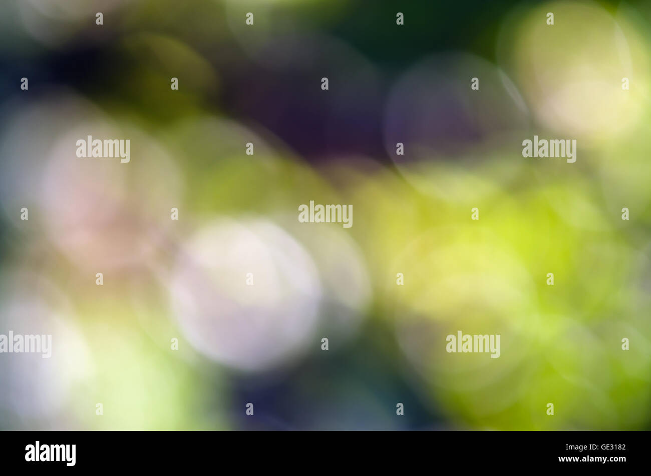 Abstract defocused background of tree, sky, light and sun shade for graphic usage - Stock Image