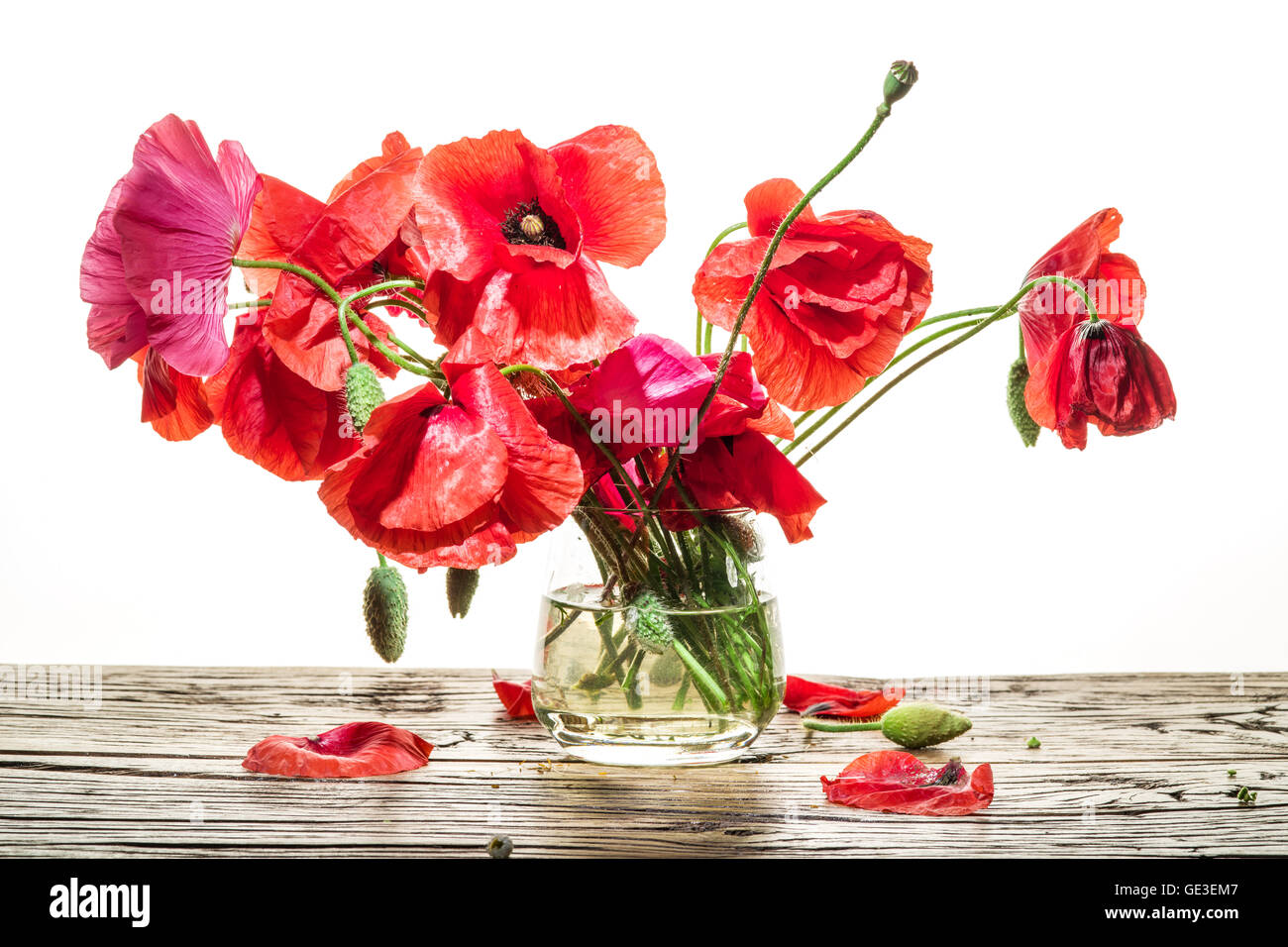 Poppy Vase Stock Photos Poppy Vase Stock Images Alamy