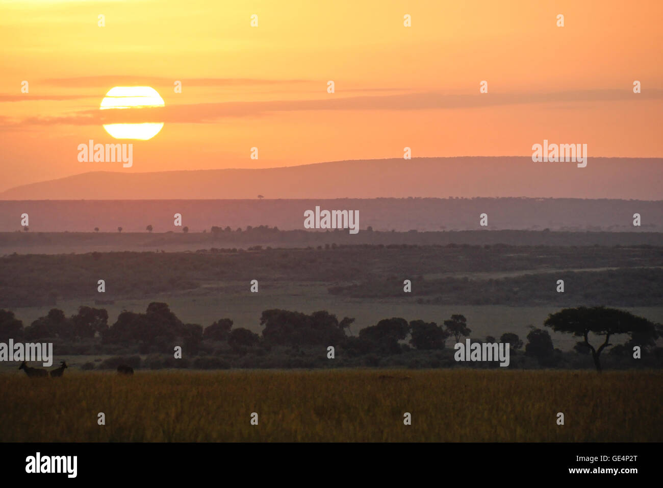 Sunrise over the Masai Mara, Kenya - Stock Image