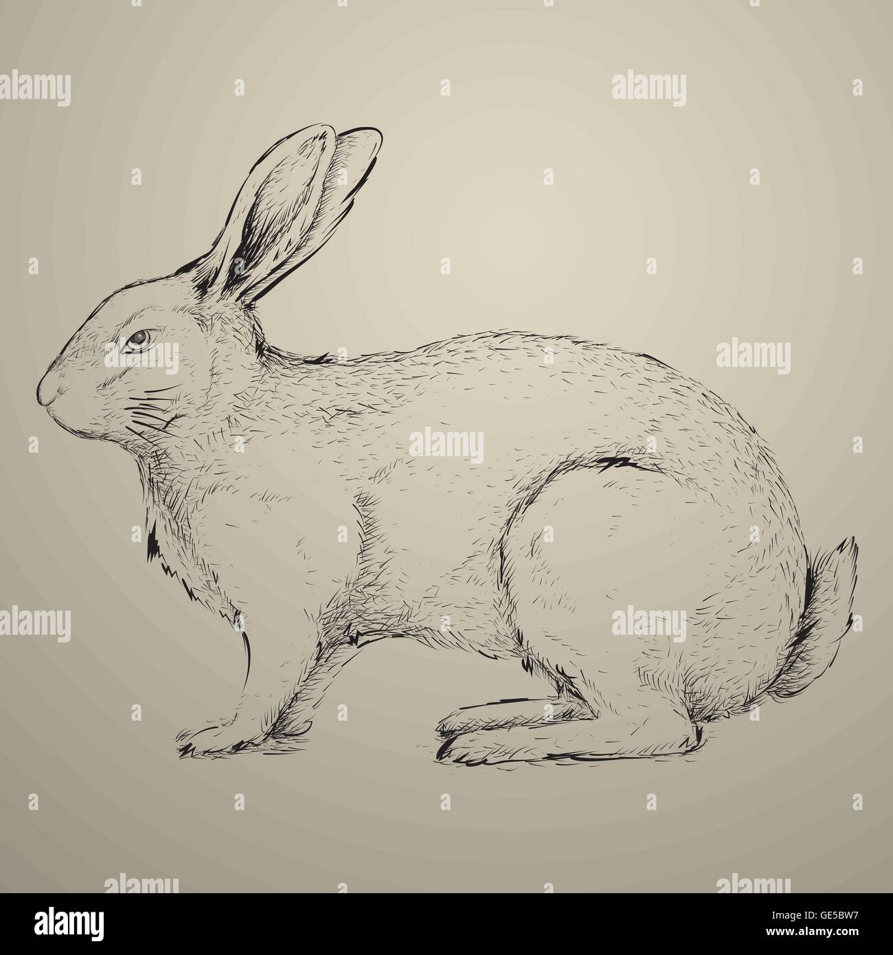 drawn rabbit bunny ear pencil and in color drawn rabbit.html