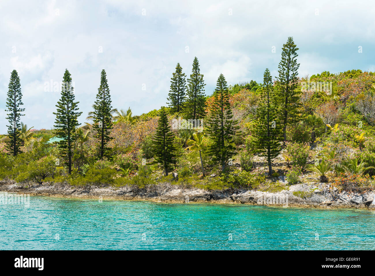 Coastal landscape and vegetation on a small island near Hamilton, Bermuda - Stock Image
