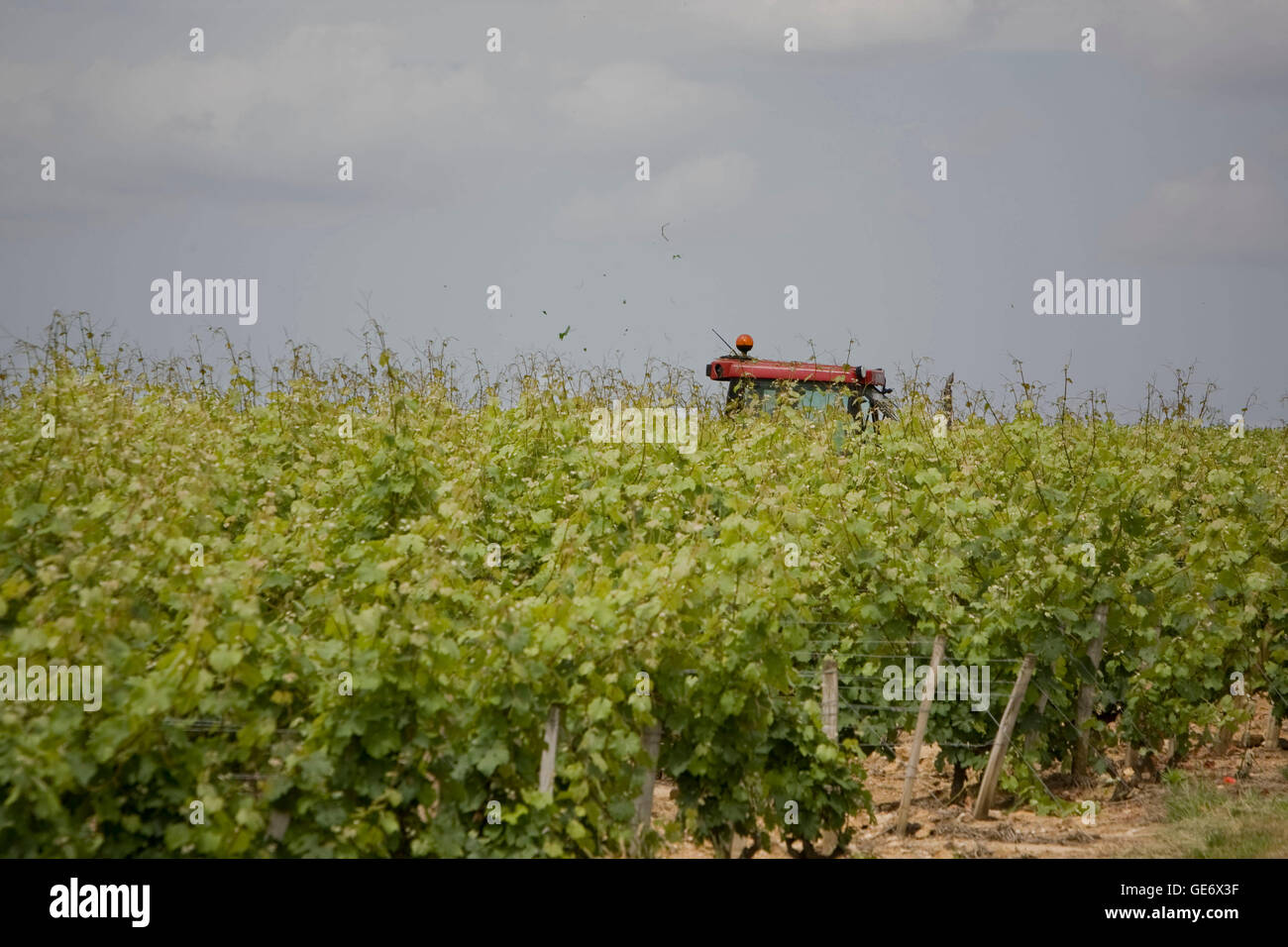 A farmer works on his tractor in a vineyard in Vouvray, France, 26 June 2008. - Stock Image