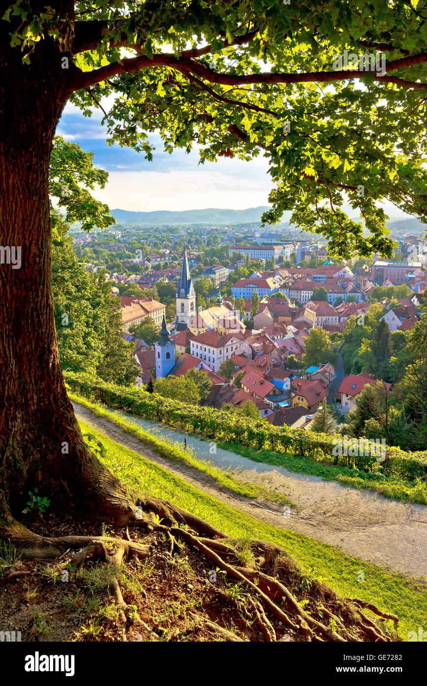 Green capital of Europe 2016 Ljubljana aerial vertical view with tree, Slovenia Stock Photo