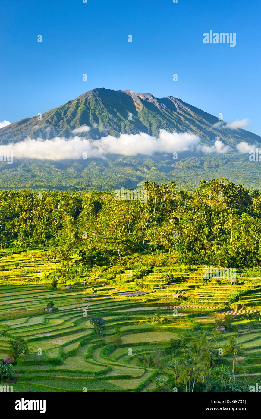 Gunung Agung Volcano and rice terrace landscape, Bali, Indonesia - Stock Image