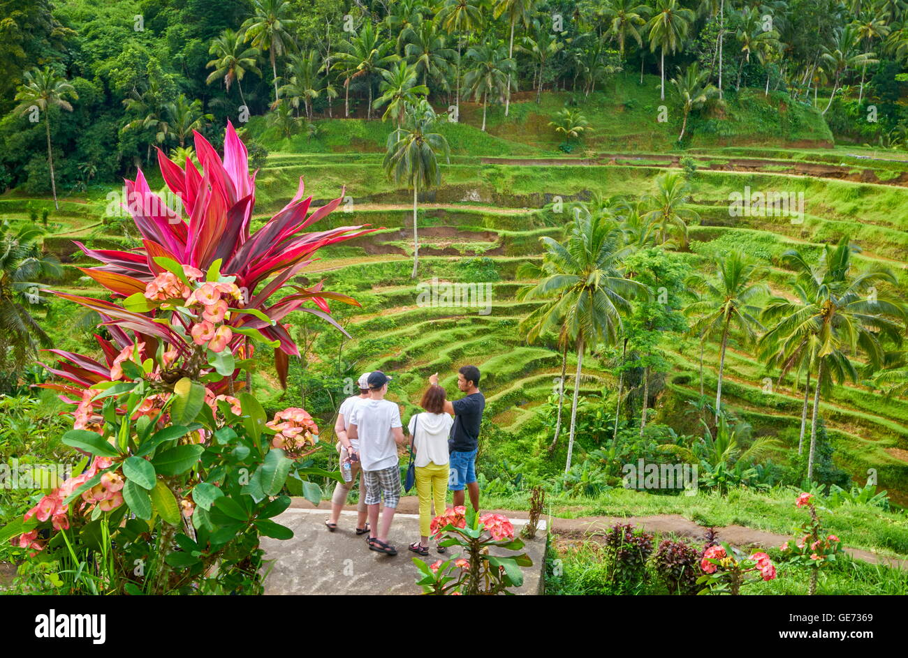 Bali, Indonesia - Tourists at the viewpoint of Rice Terrace Filed - Stock Image