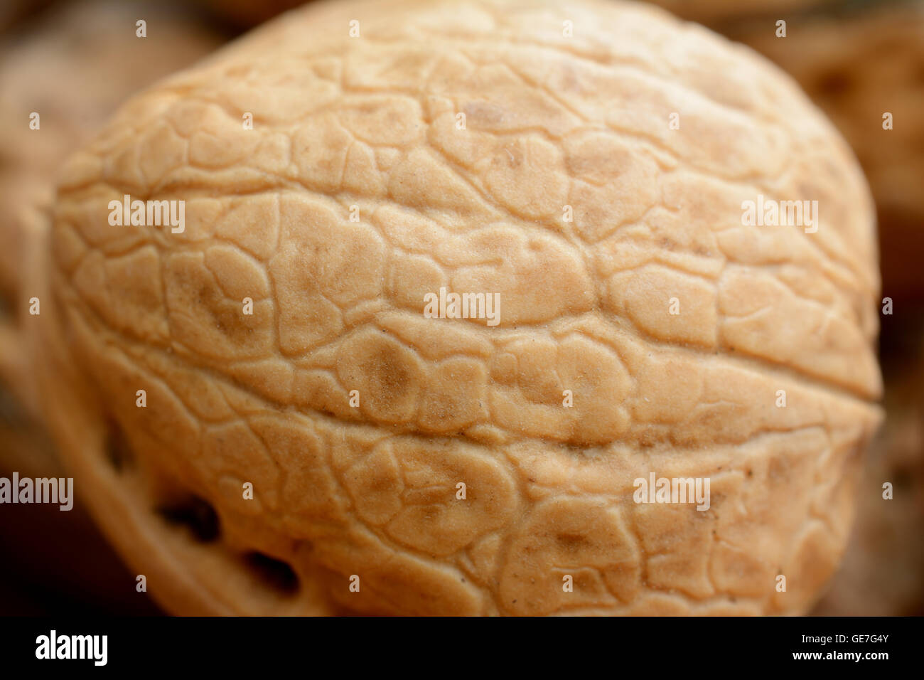 Brown walnut closeup. Shallow depth of field. - Stock Image