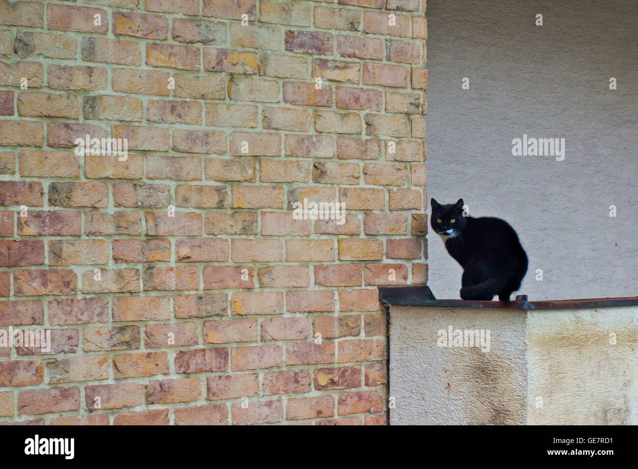 Bicolor cat sitting on a wall outdoor Stock Photo