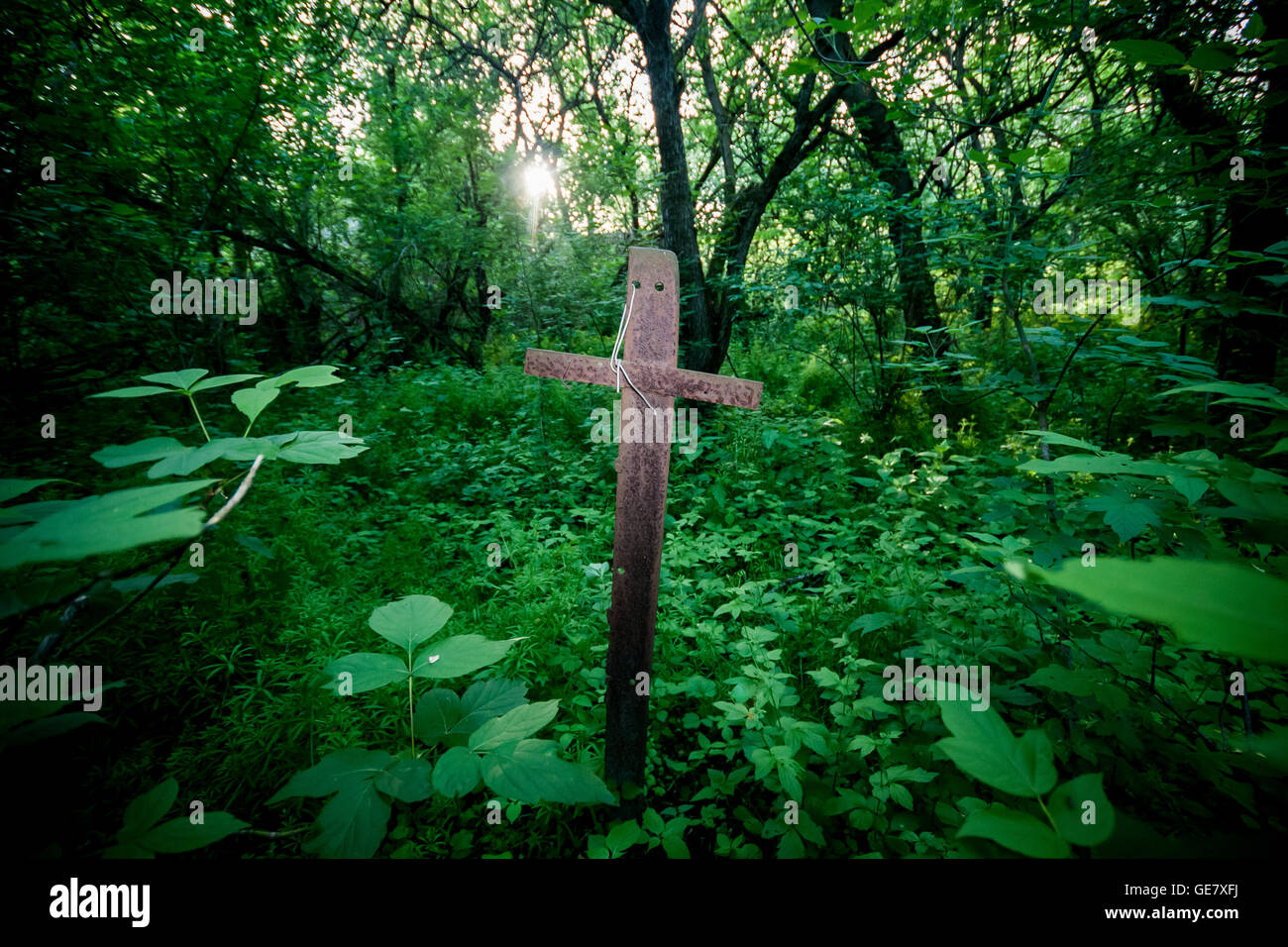 A metal cross marks a grave spot amongst the heavily over-grown foliage inside the Chernobyl exclusion zone, Ukraine. - Stock Image