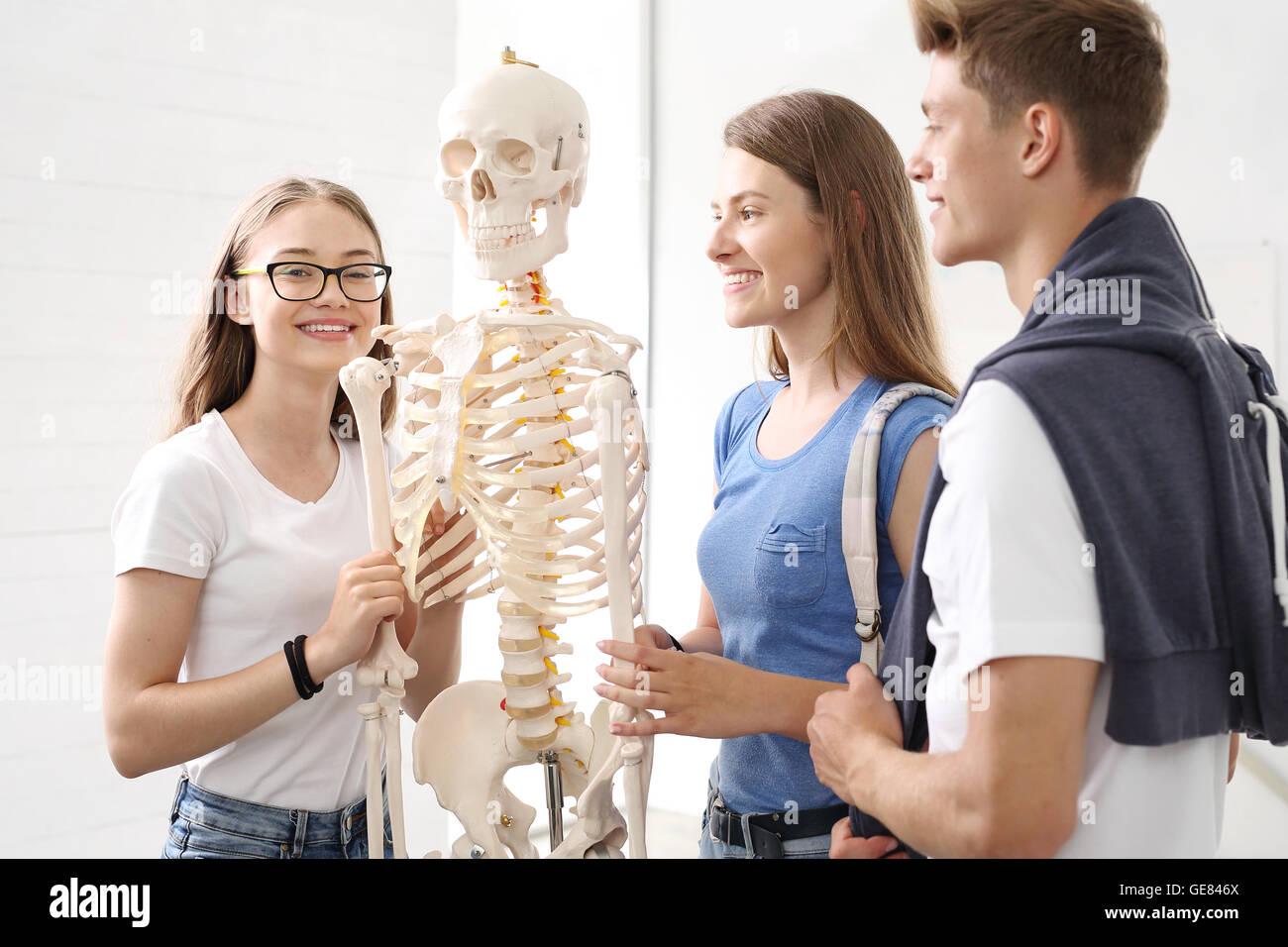 School, anatomy lesson, students watch a model skeleton Stock Photo ...