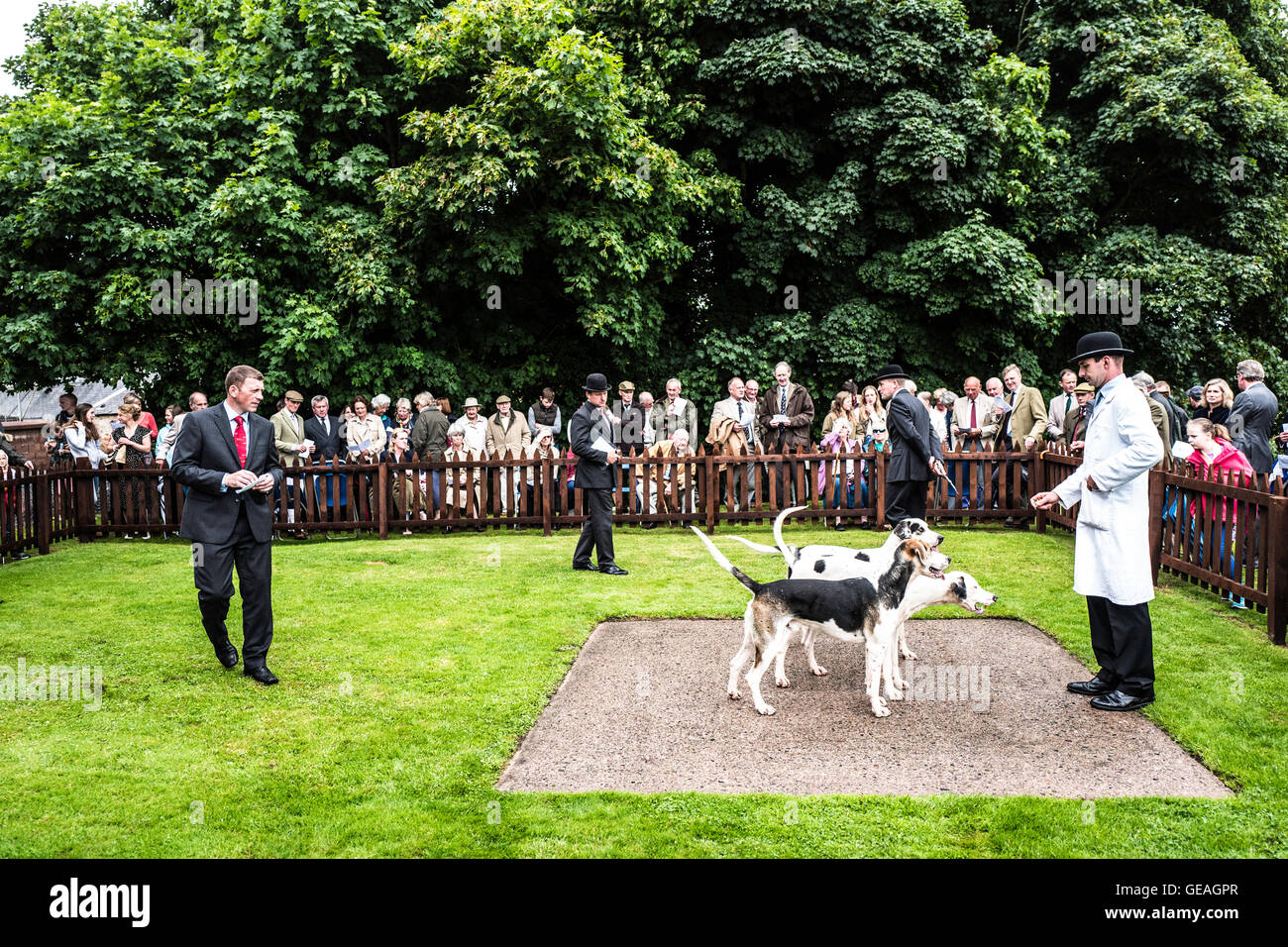 Greenwells, Bowden, St. Boswells, Scottish Borders, UK. 24th July 2016. The Duke of Buccleuch Hunt's young entry Stock Photo