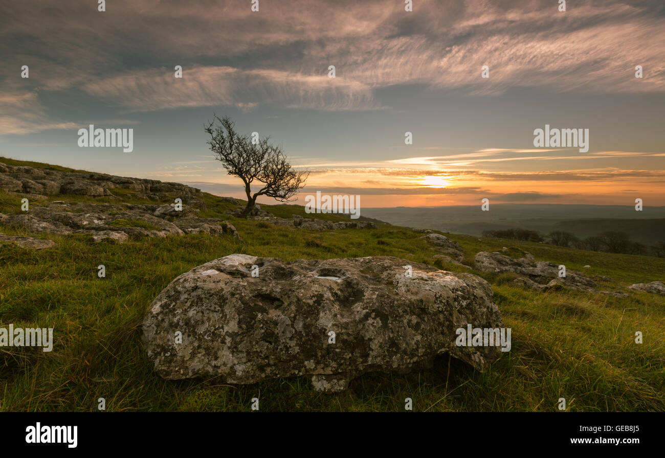 A hawthorn tree stands against a sunset sky with limestone boulder in foreground, Langcliffe, Yorkshire Dales, England, - Stock Image