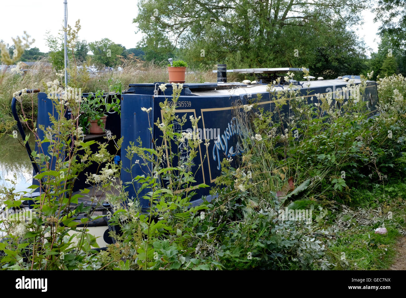 narrow boat moored amongst weeds on the oxford canal at cropredy near banbury england uk - Stock Image