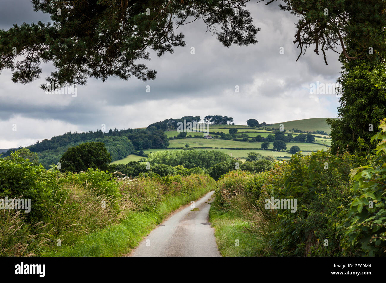 A lane from the village of More, leading towards the Linley Beeeches, lining the ridge of Linley Hill, Shropshire - Stock Image