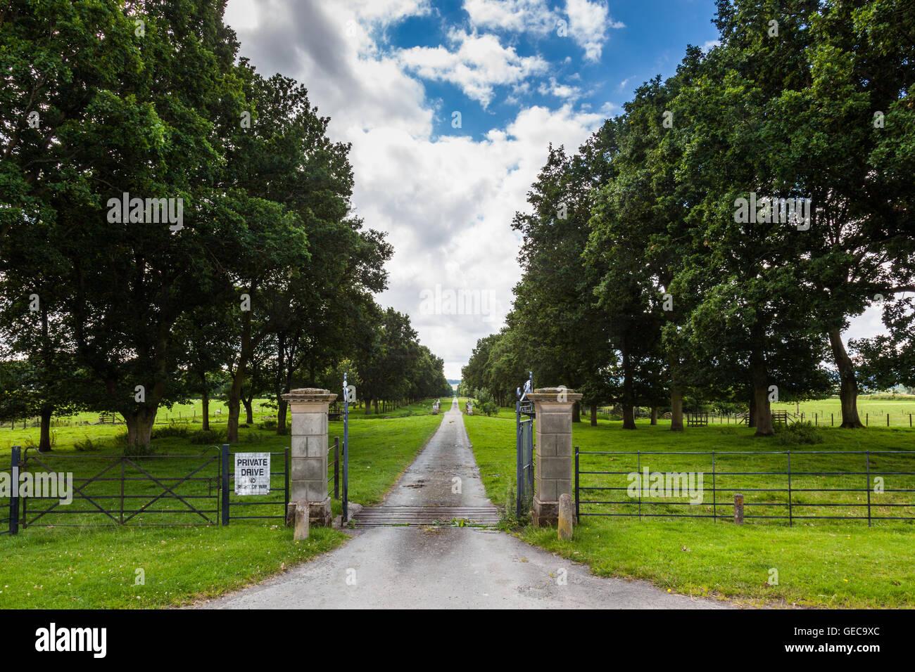 Oak Avenue, near Linley Hall, More, Lydham, Shropshire, UK - Stock Image