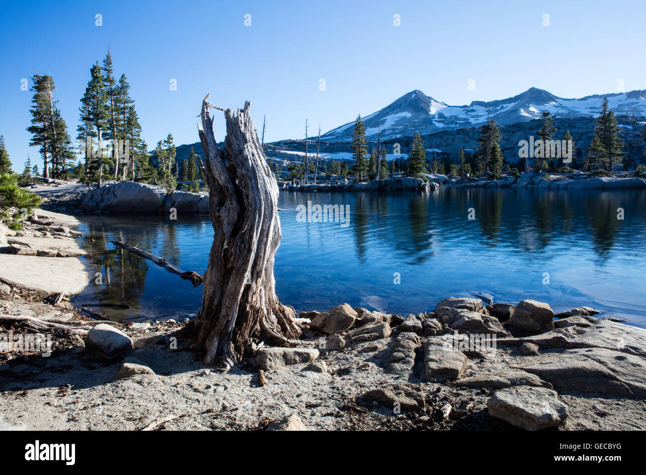 A gnarled tree stump stands on the edge of a mountain lake in the Desolation Wilderness of eastern California. - Stock Image