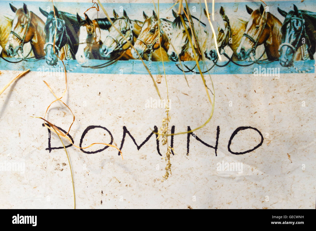 Horse Stall Name Plate With Name Domino Marked On It Stock Photo Alamy