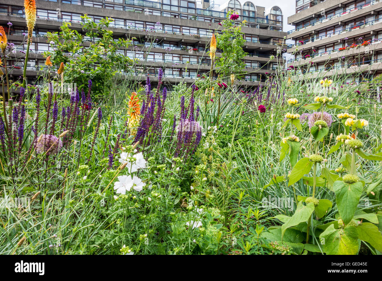Summer flowers in Beech Gardens planted by Nigel Dunnett at the Barbican Estate, London, UK - Stock Image