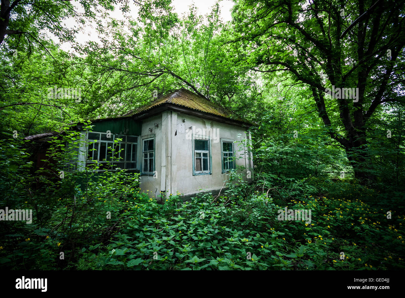 An abandoned house slowly decays and disappears into the foliage inside the Chernobyl exclusion zone, Ukraine. - Stock Image