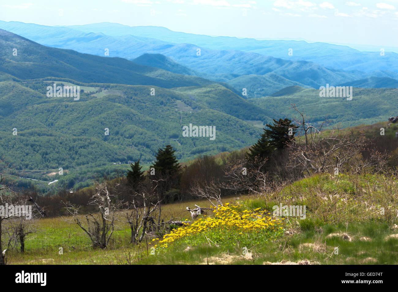 White Top Mountain, Blue Ridge Mountains, Virginia, USA - Stock Image
