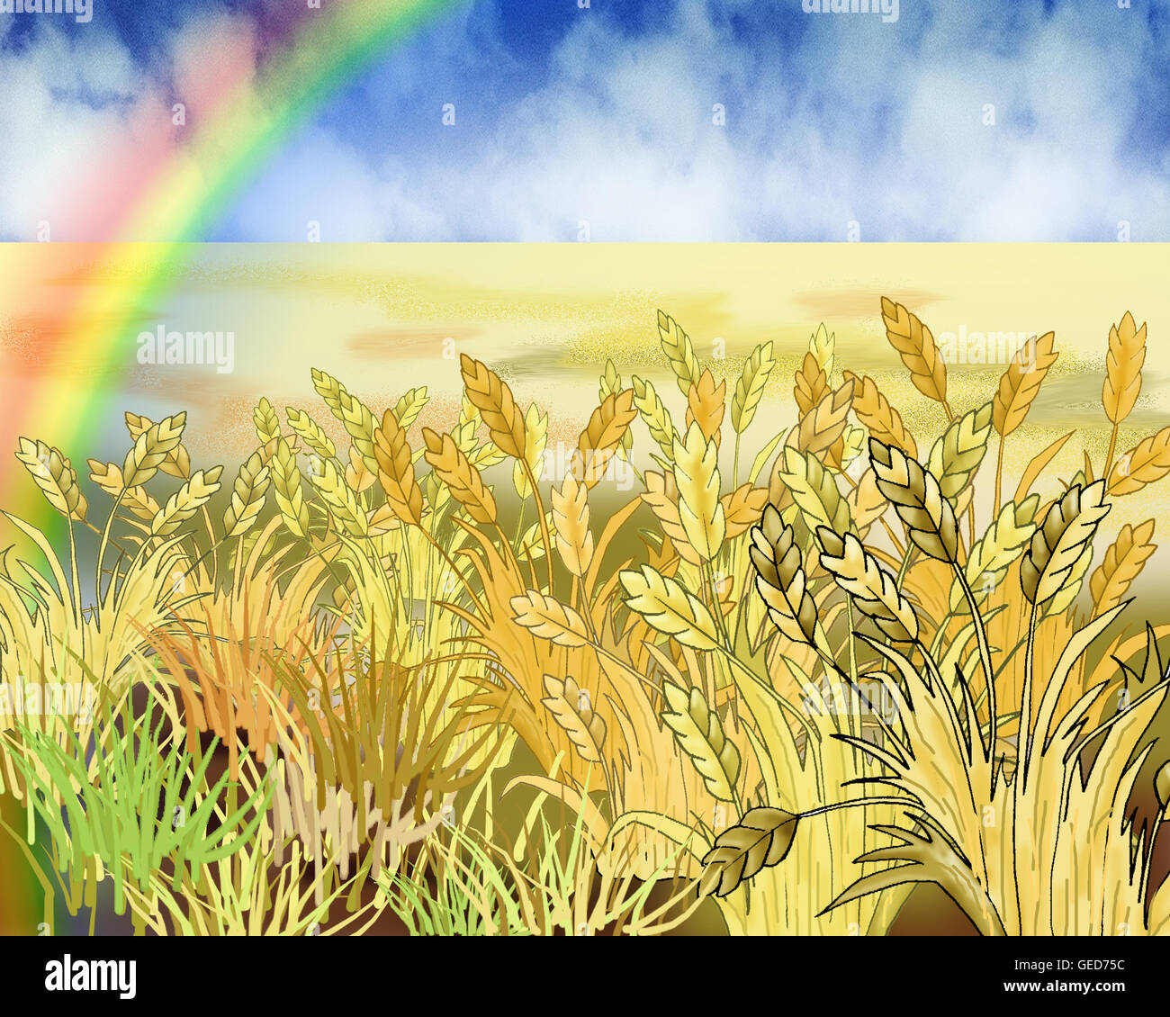 Rainbow Over Wheat Field in Summer Day. - Stock Image