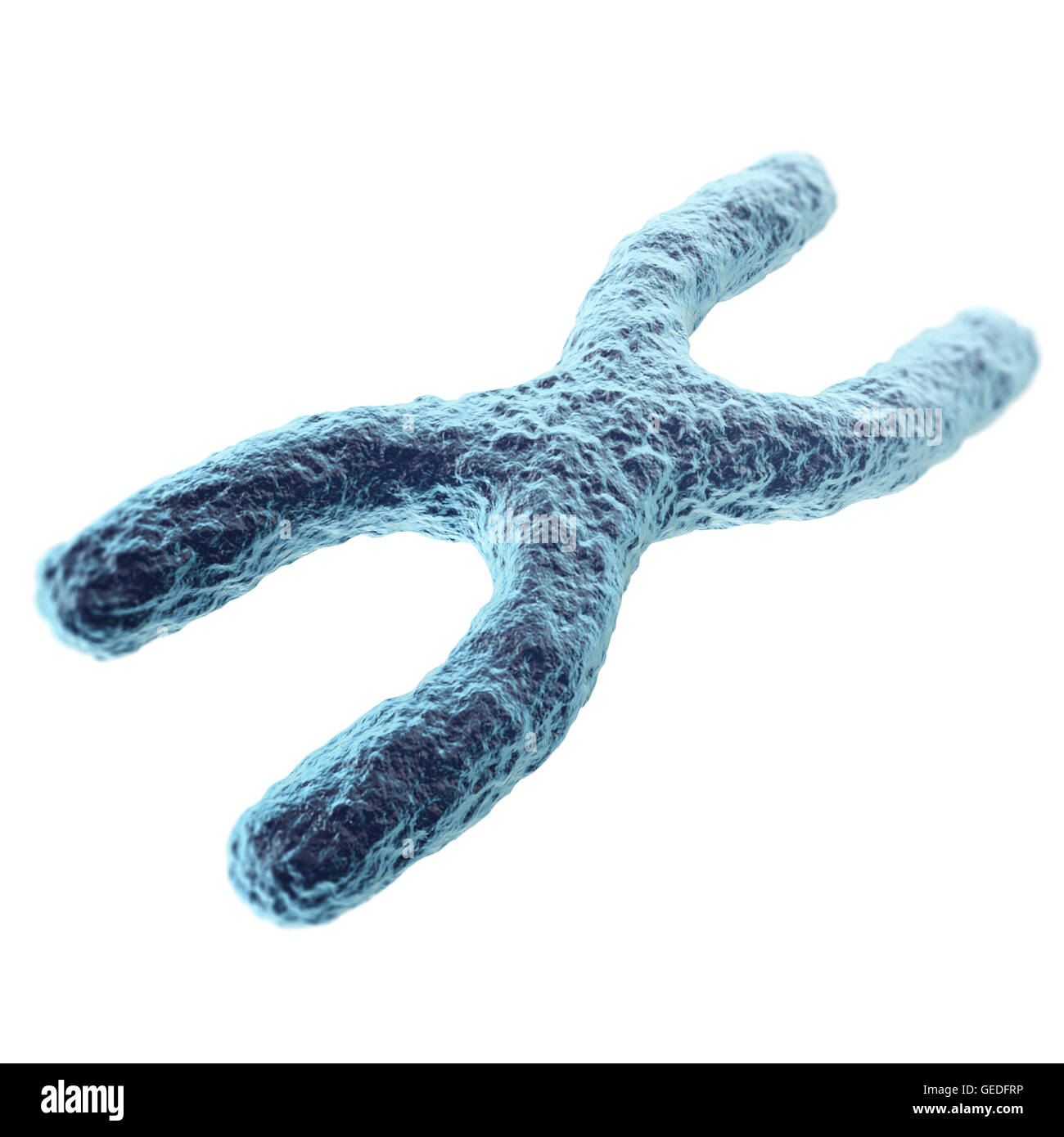 Chromosome isolated on white background. with depth of field effect, scientific concept. 3d illustration - Stock Image