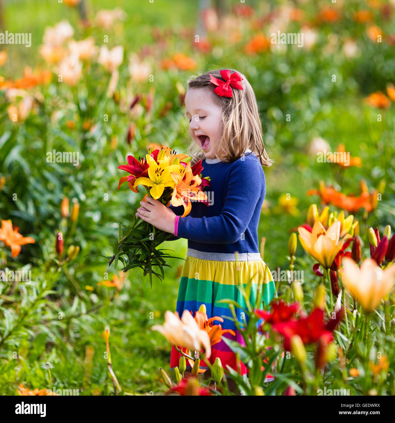 cute little girl picking lily flowers in blooming summer garden