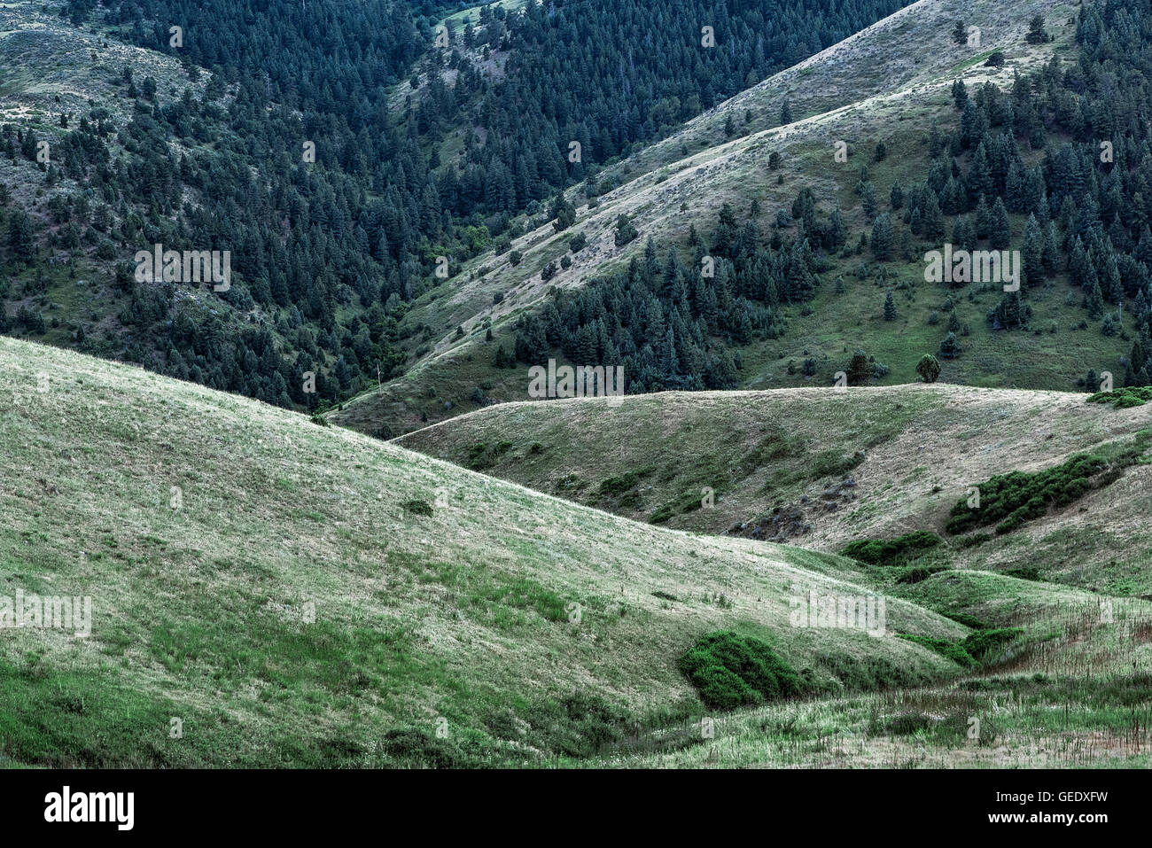 Foothill landscape, Golden, Colorado, USA - Stock Image