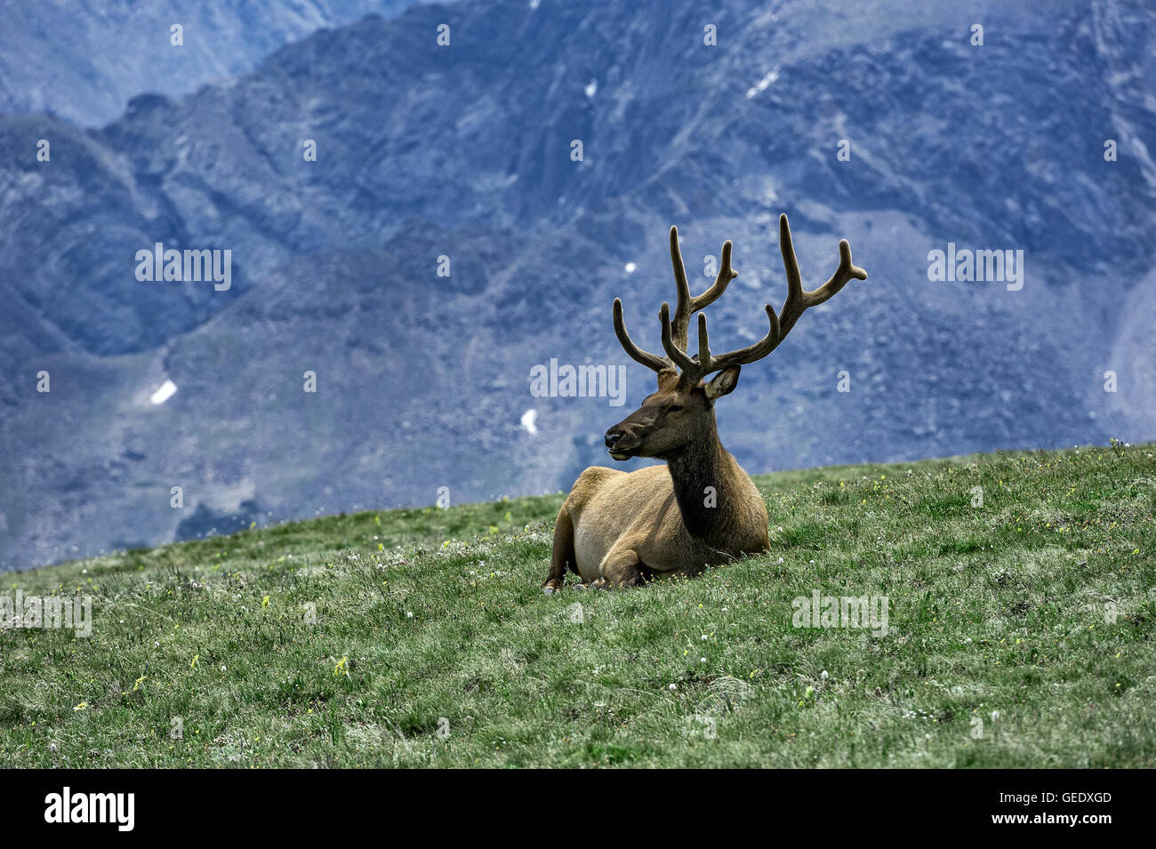elk mountain guys Guy's top 3 wyoming elk areas guy eastman, editor-in-chief january 9, 2017 elk,  the shirley mountain unit may be one of the best chances in wyoming for an elk hunter to kill a nice six-point bull with relatively little effort  do you guys support backcountry hunters and anglers reply david carlin march 5, 2017 at 2:02 pm.