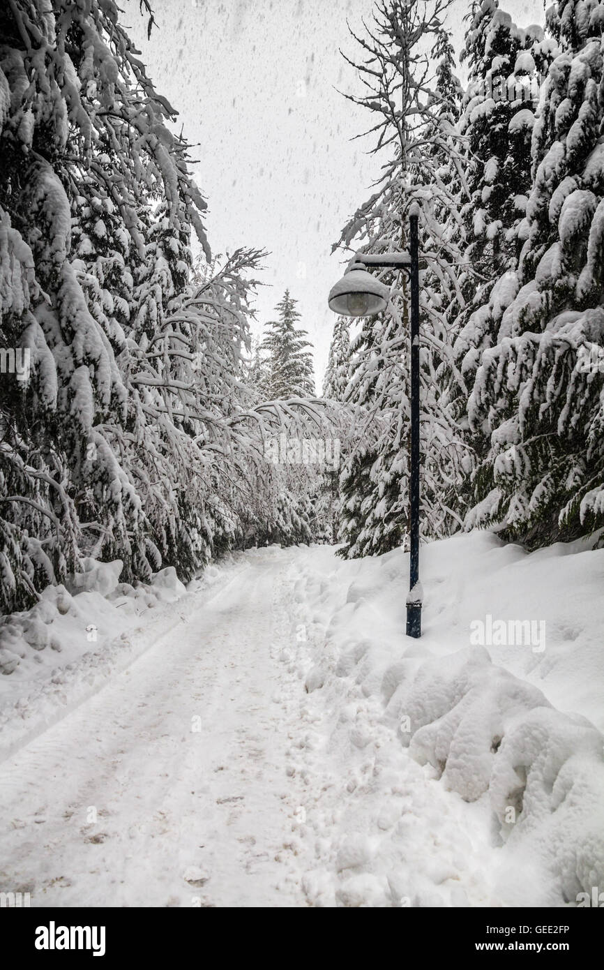 Snow-covered trail through deciduous trees with street lamp - Stock Image