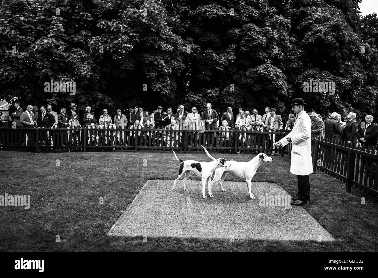 Greenwells, Bowden, Scottish Borders, UK. 24th July 2016. The Duke of Buccleuch Hunt Puppy Show 2016. Stock Photo