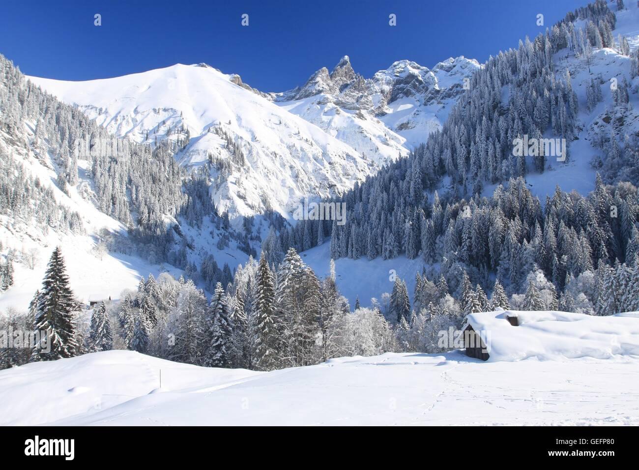 Buchenrain Alm, Stillach Valley, Allgaeu - Stock Image