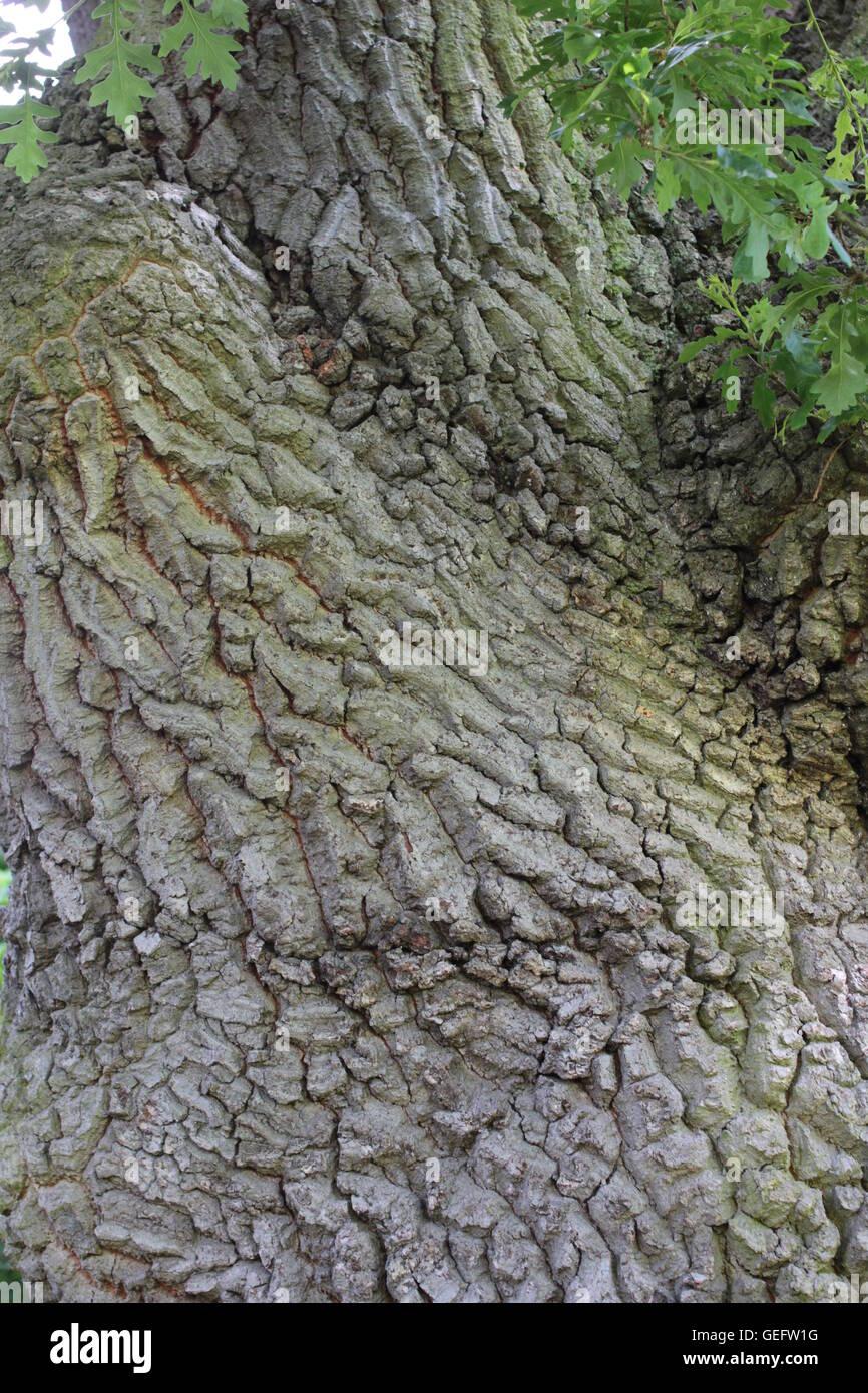 Closeup texture of tree trunk - Stock Image