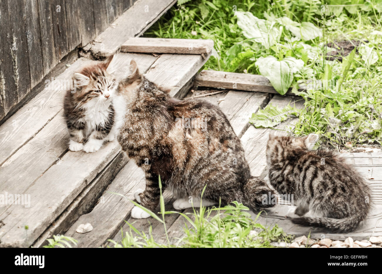 Family of cats: mother cat with kittens at summer garden - Stock Image
