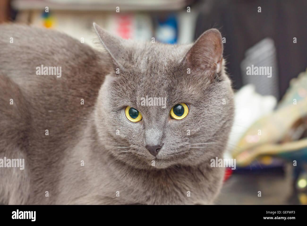 purina cat food reviews