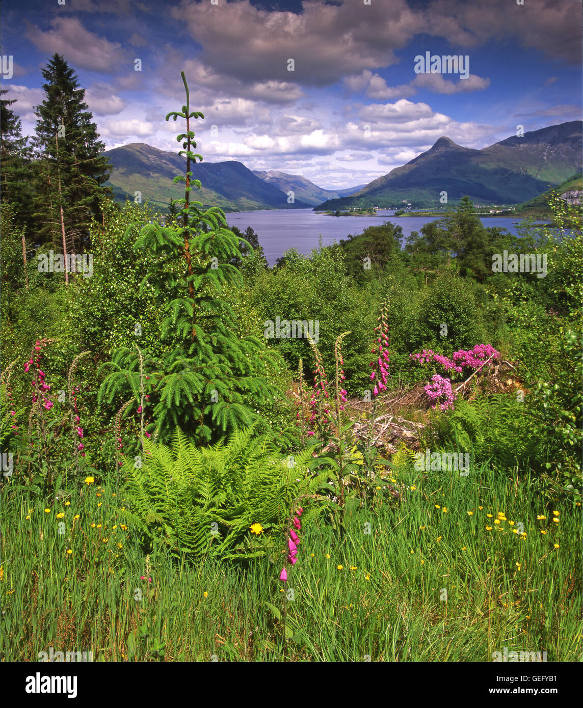 Springtime view towards the Pap of Glencoe and Loch Leven, Ballachulish, West Highlands - Stock Image