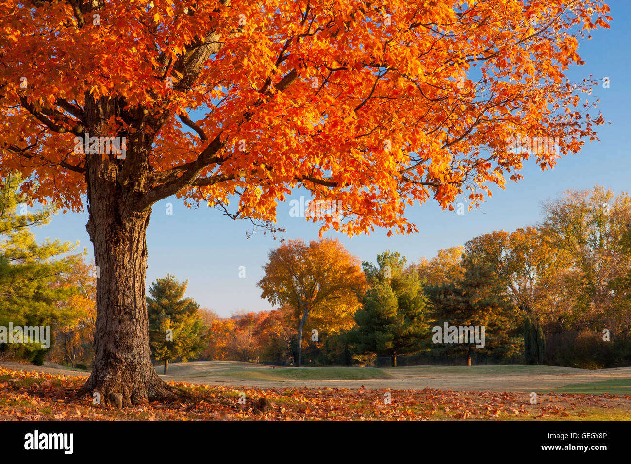 Autumn colors in Brentwood, Tennessee, USA - Stock Image